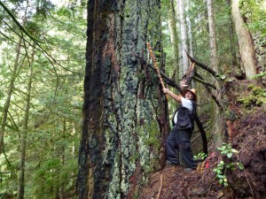 Mus-swiya (Jamie Dixon) at 'Mus-swiya's Tree' the 2nd largest Douglas-Fir on the lower Sunshine Coast