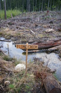 Flume-Creek-Headwaters-Clearcut