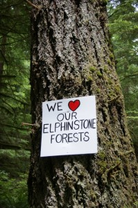 10392490_728959267146922_581661645990383767_n - we love our Elphinstone Forests