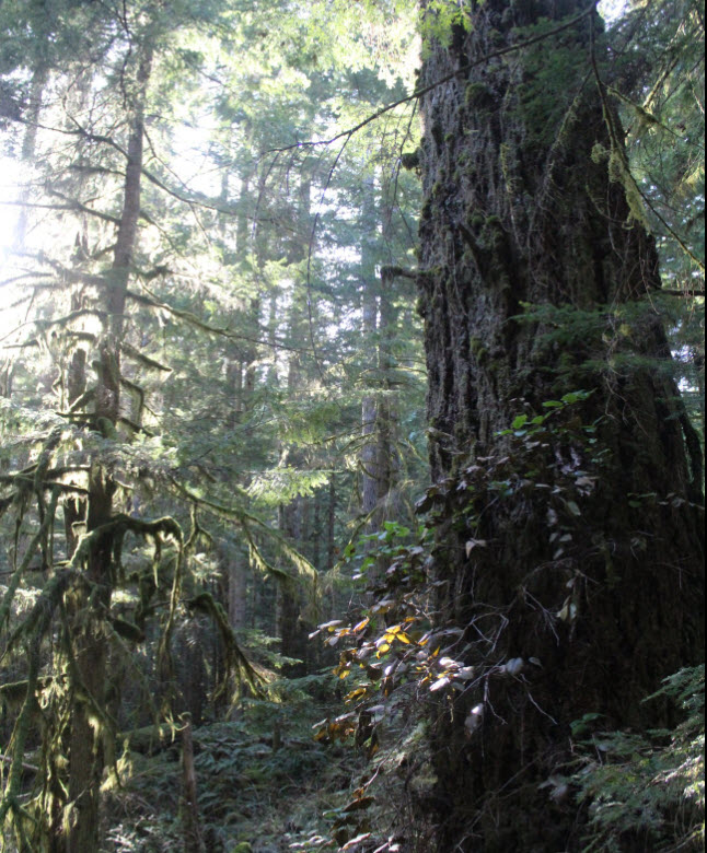 Save the Clack Creek Gallery Forest - (BCTS) TSL A87126 Cutblock