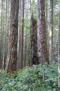 Chanterelle Forest-2
