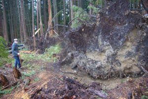 Hans counted over 20 big trees blow down on the edge. And this was just the 1st storm to come into the clearcut just a few weeks after logging. BCTS will say its collateral damage, or this is nothing, or we expected a few trees to come down. STOP CLEARCUT LOGGING IT A DISGRACE TO HOW FORESTS ACTUALLY EVOLVE. These large openings cause wind dynamics that are very hard to predict. When wind enters the clearcut opening and changes direction then the Venturi-effect says velocity can increase 2-3X fold. — at 10 mins. above Roberts creek, BC. — at 10 mins. above Roberts creek, BC.