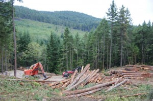 Active logging discovered in the Chapman Creek Community Drinking Watershed, Sunshine Coast