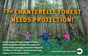 Chanterell Forest Needs Protection-2017-05-03_17-56-20